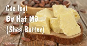 các loại bơ hạt mỡ